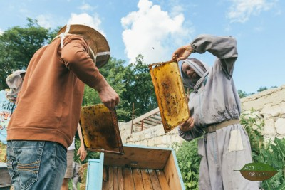 Eco Training Center ActiveOrganic beekeeping